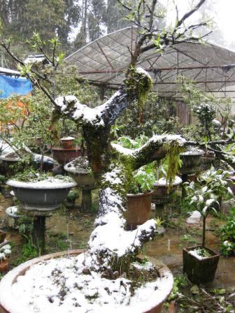 Tuyết rơi tại Sapa