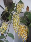 Hoa cay canh Sapa 001