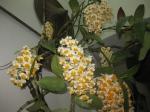Hoa cay canh Sapa 002
