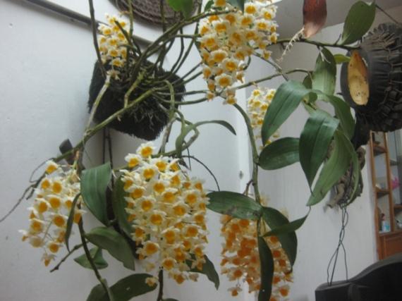 Hoa cay canh Sapa 003
