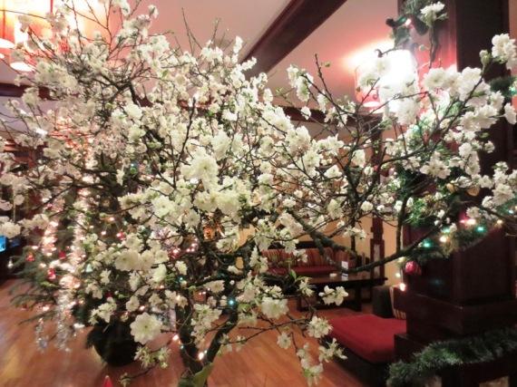 Hoa mai trắng chơi tết 2013