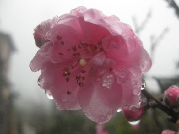 Hoa cay canh Sapa tet 2013 041