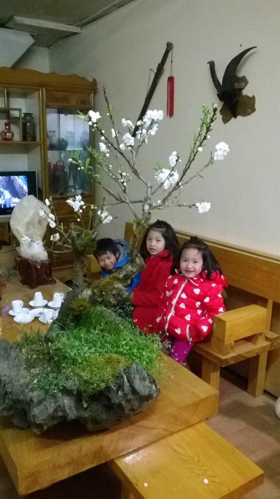 Cây đào bạch xuân 2015.